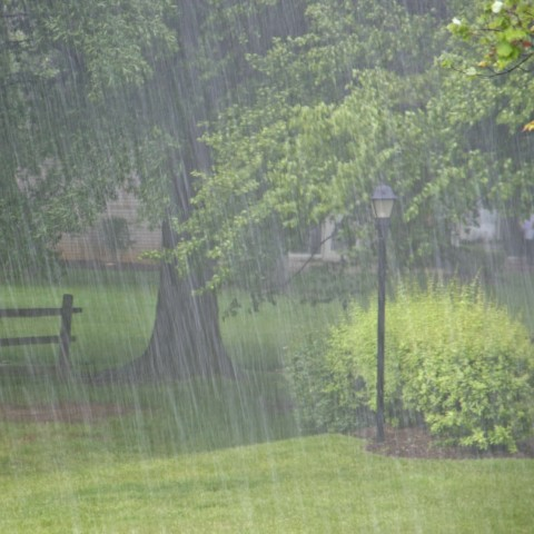 Heavy Rain in a Park