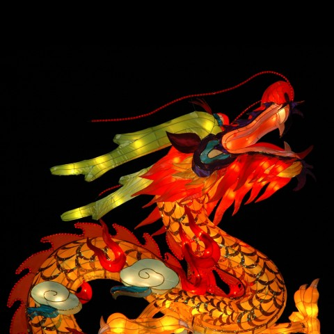 Dragon for Festival
