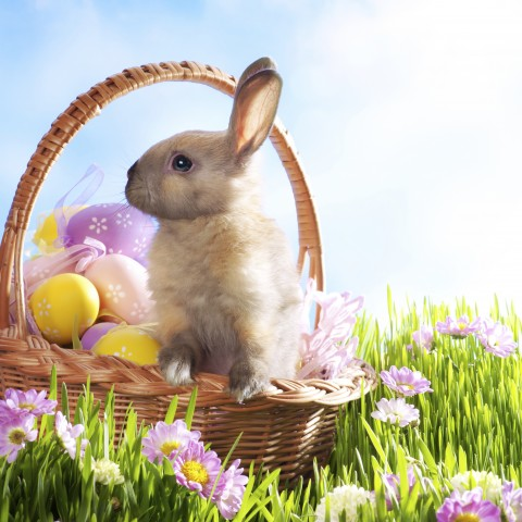 An Easter Image with Green Grass, Easter Eggs, and a Rabbit