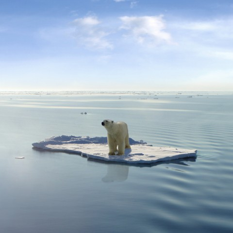 A polar bear stuck on a block of ice, completely surrounded by water.