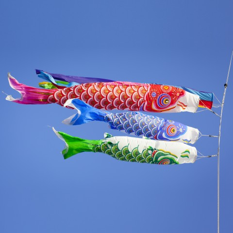 Koinobori in Air