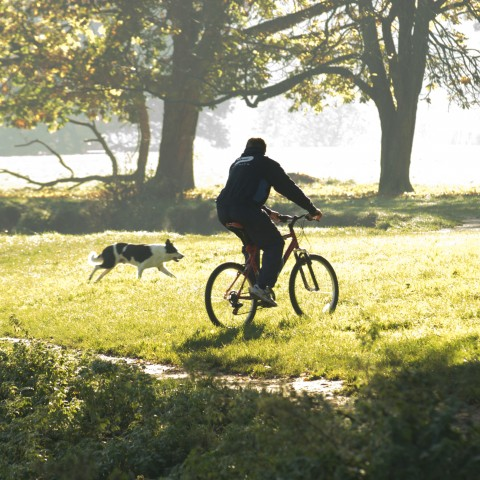 Man Riding Bicycle with Dog in Field