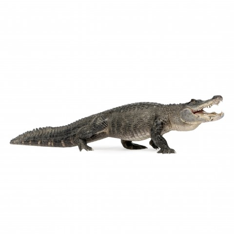 An Alligator against White Background