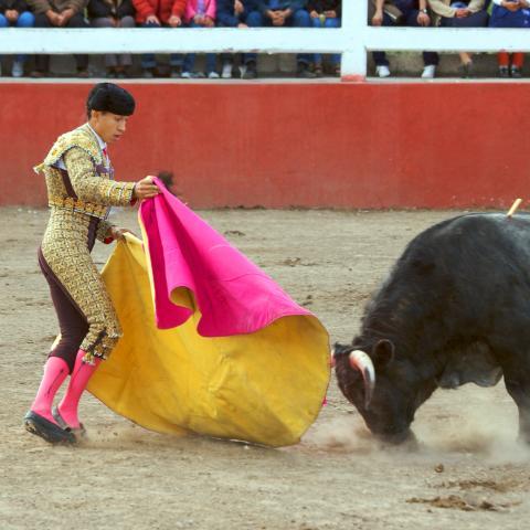 A Bullfight