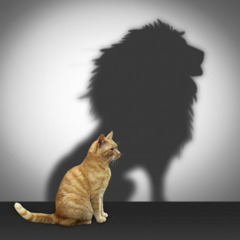 Cat Throwing the Shadow of a Lion.