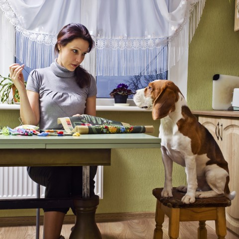 Basset Sitting on a Barstool Next to a Table with a Woman Who's Embroidering