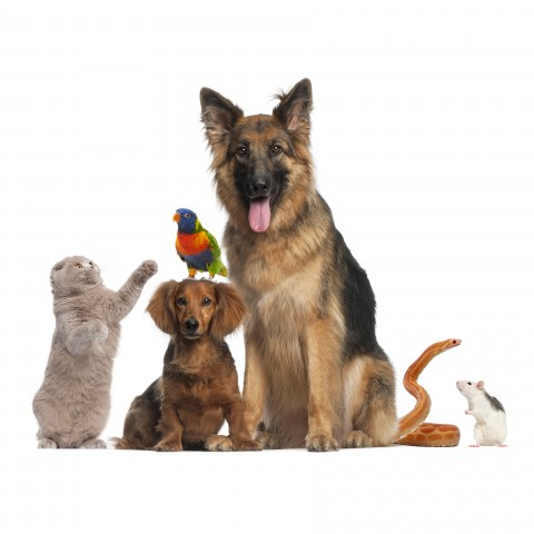 A Selection of Pets
