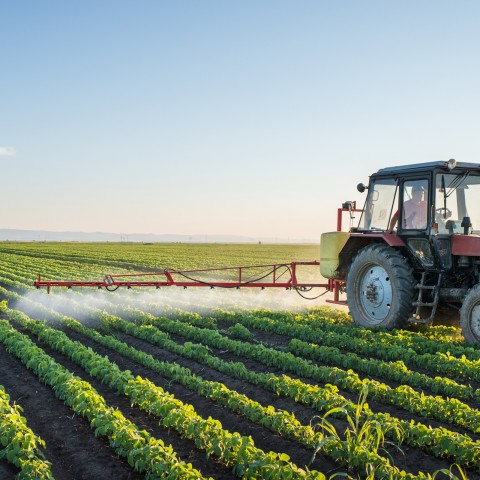 A Tractor Spraying the Plants on a Field