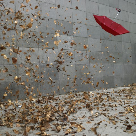 Leaves and Umbrella in the Wind