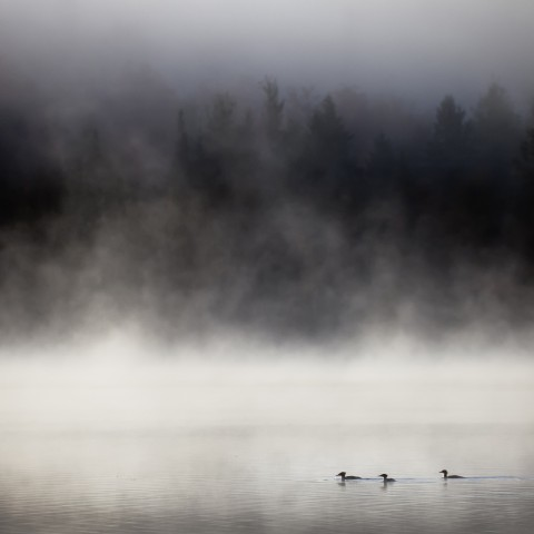 Fog on a Pond with Ducks
