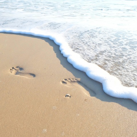 Footprints in the Wet Sand on the Beach