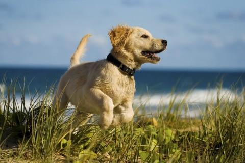 Dog Running Near Ocean