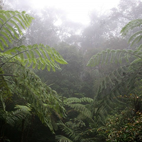 Humidity in Tropical Forest