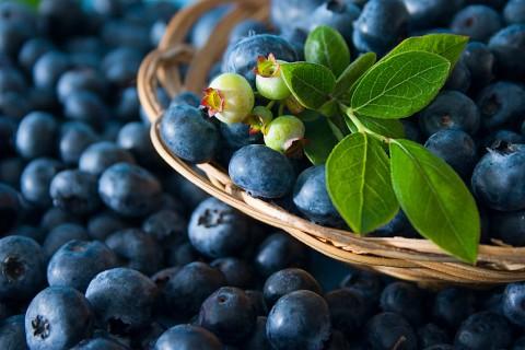 body boost blåbär